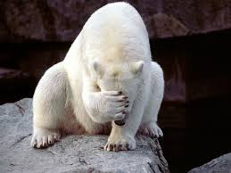 poloar bear funny